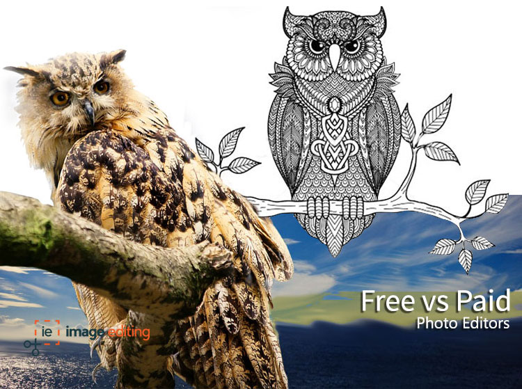 An animated owl & a sketch owl image edited by imageediting