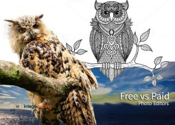 Illustration of How Edited in Paid Editors of an Owl Image can Make a Difference when It is Edited in Free Editors