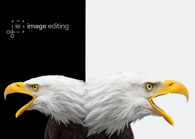 Before and After Version of an Eagle while Removing the Background
