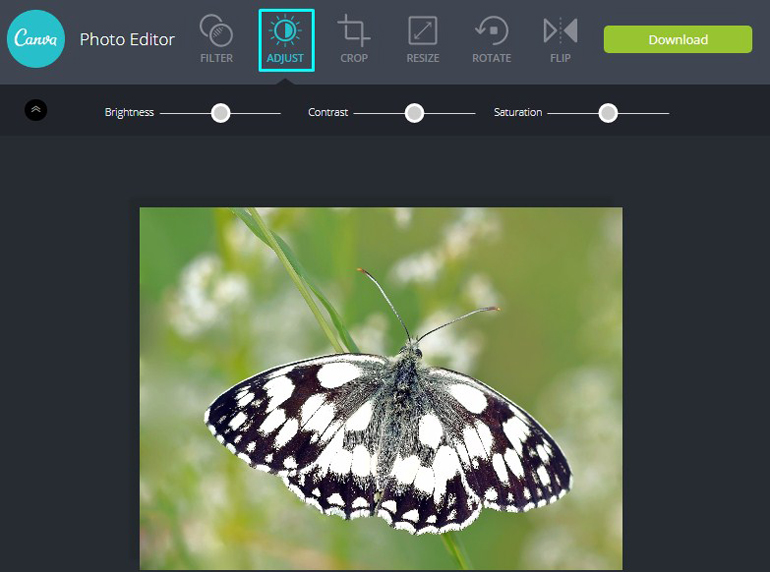 Apply Adjustment Tool on a butterfly in Canva Photo Editor