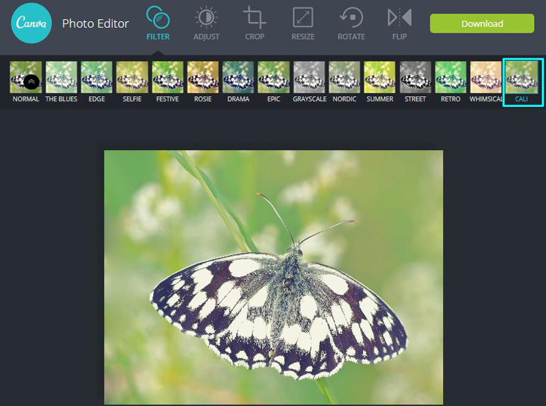 Apply Cali Adjustment Filter on a butterfly in Canva Photo Editor