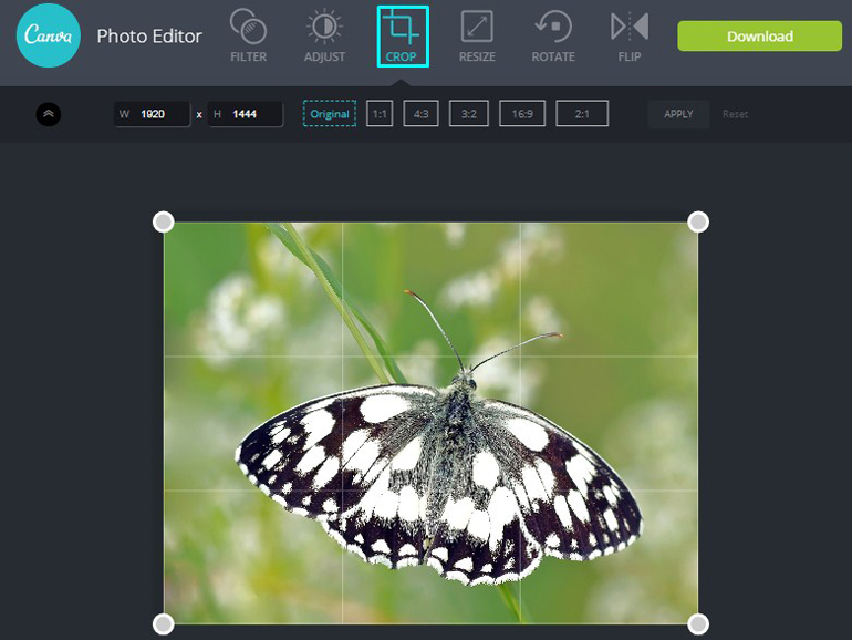 Apply Crop Tool on a butterfly in Canva Photo Editor