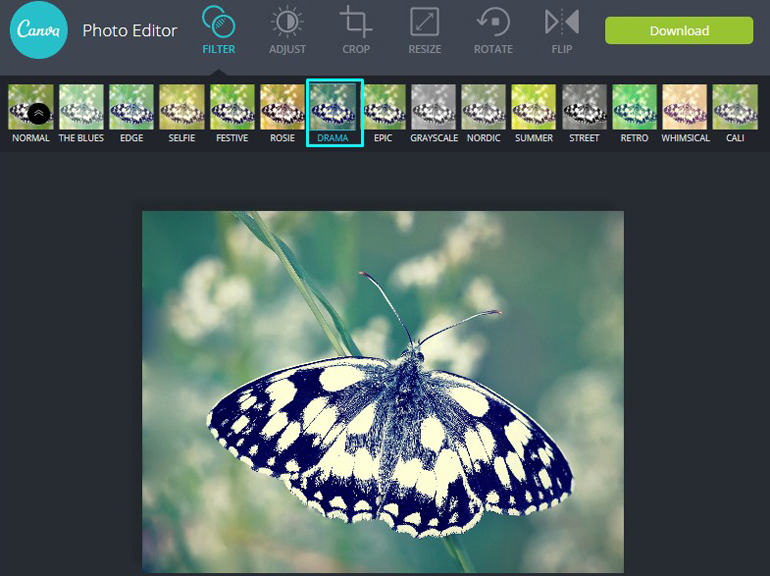 Apply Drama Adjustment Filter on a butterfly in Canva Photo Editor