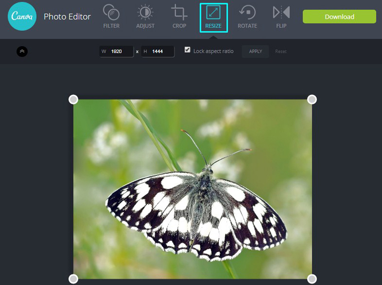 Apply Resize Tool on a butterfly in Canva Photo Editor