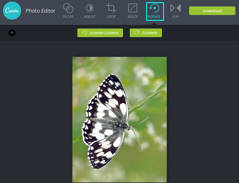 Apply Rotate Tool on a butterfly in Canva Photo Editor