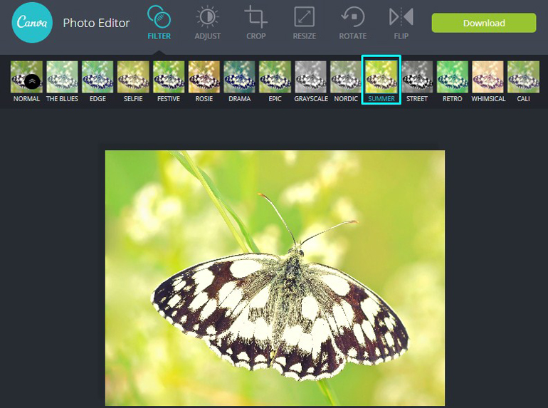 Apply Summer Adjustment Filter on a butterfly in Canva Photo Editor