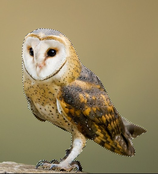 The circumference of the entire owl is selected